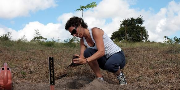 Another tree being planted in the CoolTravelForest by Anouk Pappers