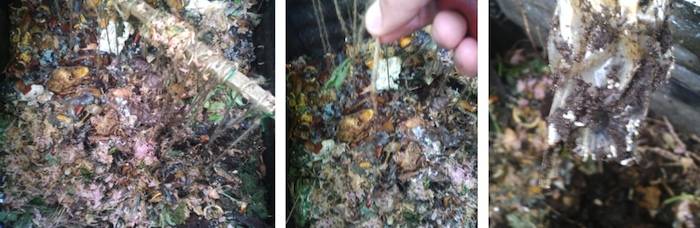Biofoil number 4 of the home composting test, full of ants and larvae.